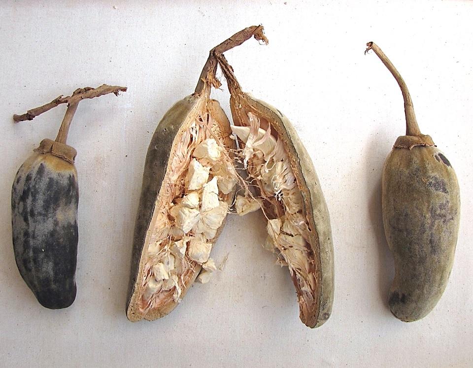 Succo rinfrescante ai frutti di Baobab