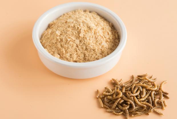 EFSA: ok alla Camola della farina, cibo del futuro